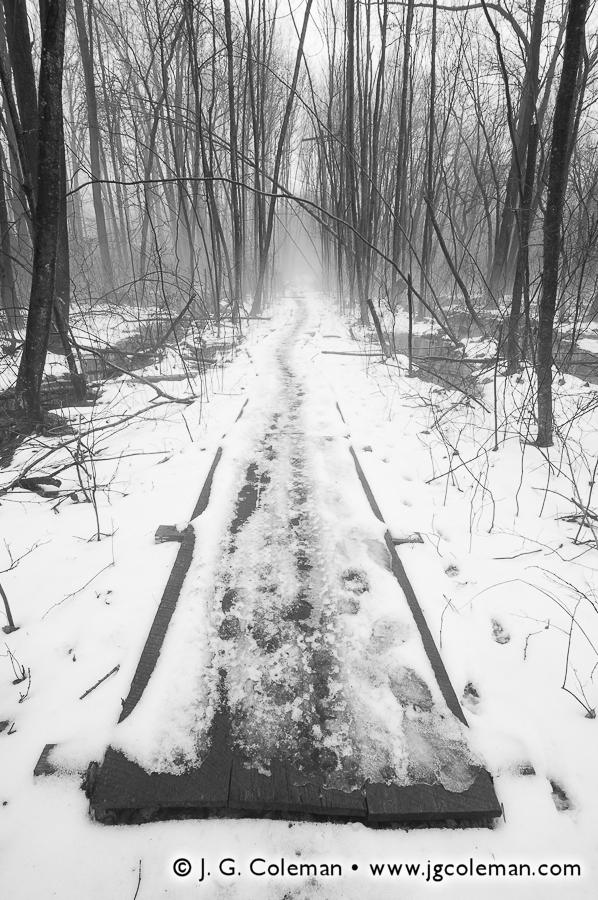 &#8220Winter Pathway&#8221, Raptor Woods, Ansonia Nature Center, Ansonia, Connecticut