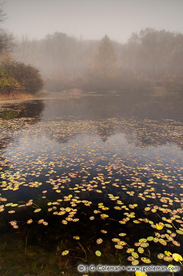 &#8220Foggy Morning at Trailwood&#8221, Beaver Pond, Edwin Way Teale Audubon Sanctuary, Hampton, Connecticut
