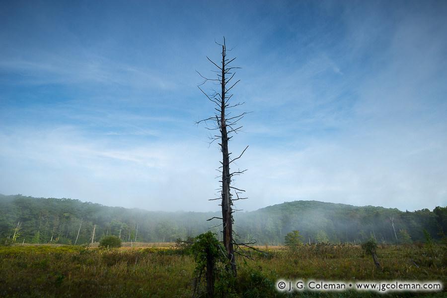 &#8220Hermit&#8221, Great Mountain Forest, Norfolk, Connecticut