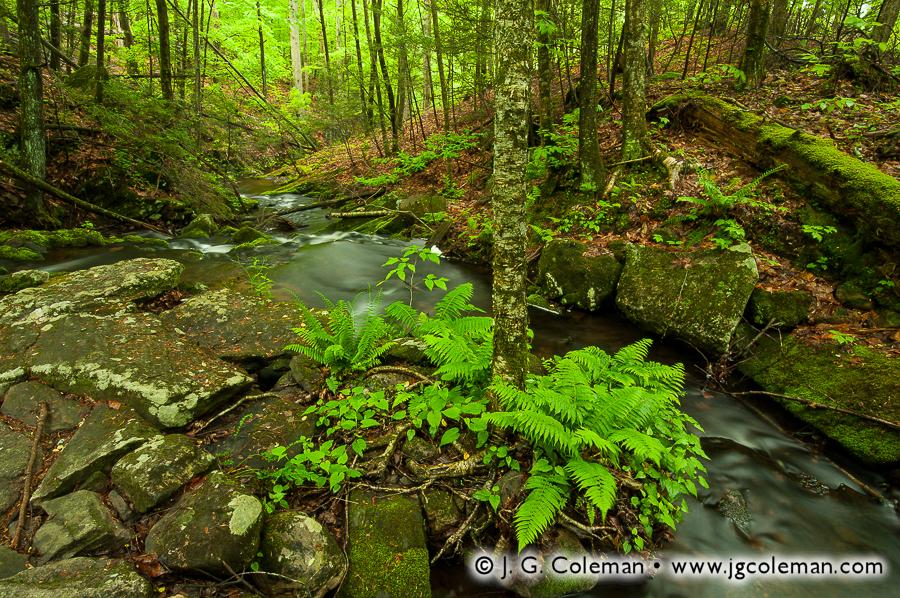 &#8220Mianus Woodlands&#8221, Havemeyer Brook, Mianus River Gorge Preserve, Bedford, New York