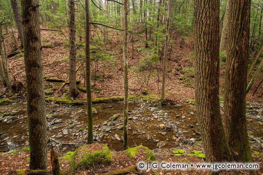 &#8220Deepwoods Oasis&#8221, Spruce Brook, Naugatuck State Forest, Beacon Falls, Connecticut