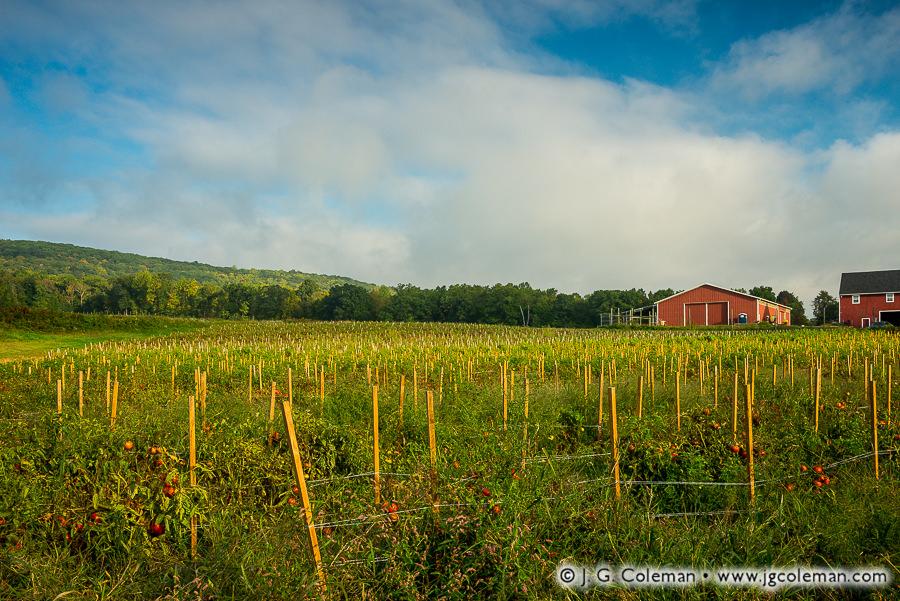 &#8220Yankee Farmlands № 85&#8221, Cheshire, Connecticut