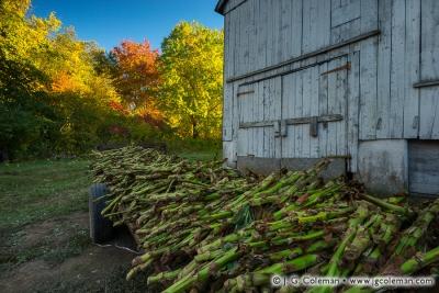 Yankee Farmlands № 87