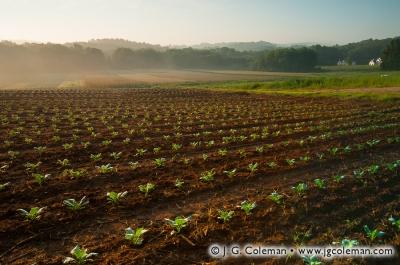 Yankee Farmlands № 2