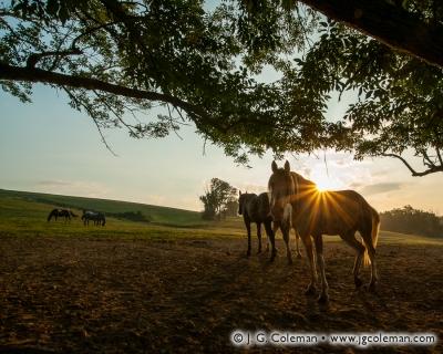 Yankee Farmlands № 4