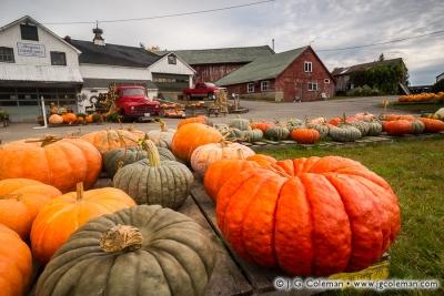 Yankee Farmlands № 38