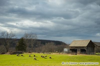 Yankee Farmlands № 62