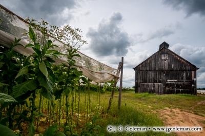 Yankee Farmlands № 7