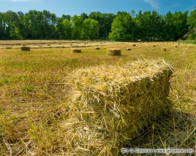 Yankee Farmlands № 71