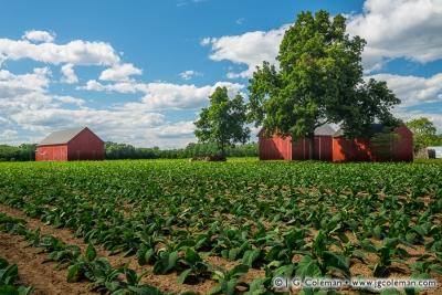 Yankee Farmlands № 74
