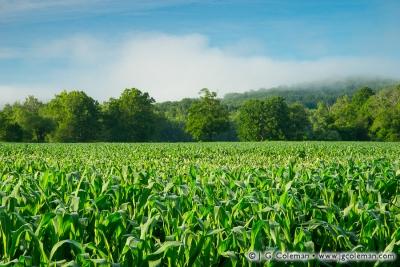 Yankee Farmlands № 77