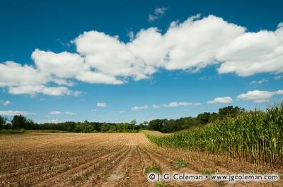 Yankee Farmlands № 8