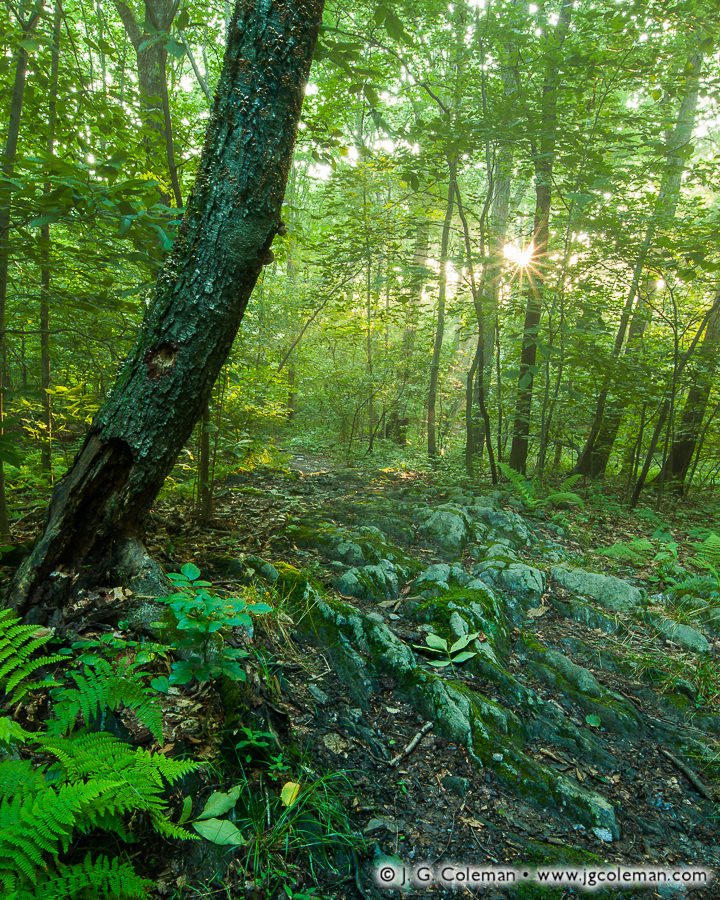 Woodland Remembrance (Alice Newton Street Memorial Park, Woodbridge, Connecticut)