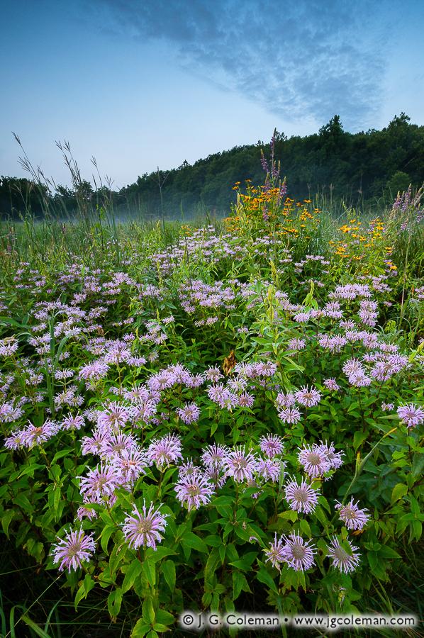 &#8220South Britain Meadowlands&#8221, Bent of the River Audubon Sanctuary, Southbury, Connecticut