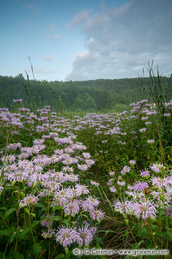 &#8220Hills Beyond the Pomperaug&#8221, Bent of the River Audubon Sanctuary, Southbury, Connecticut