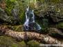 Chester-Blandford State Forest & Goldmine Brook Falls