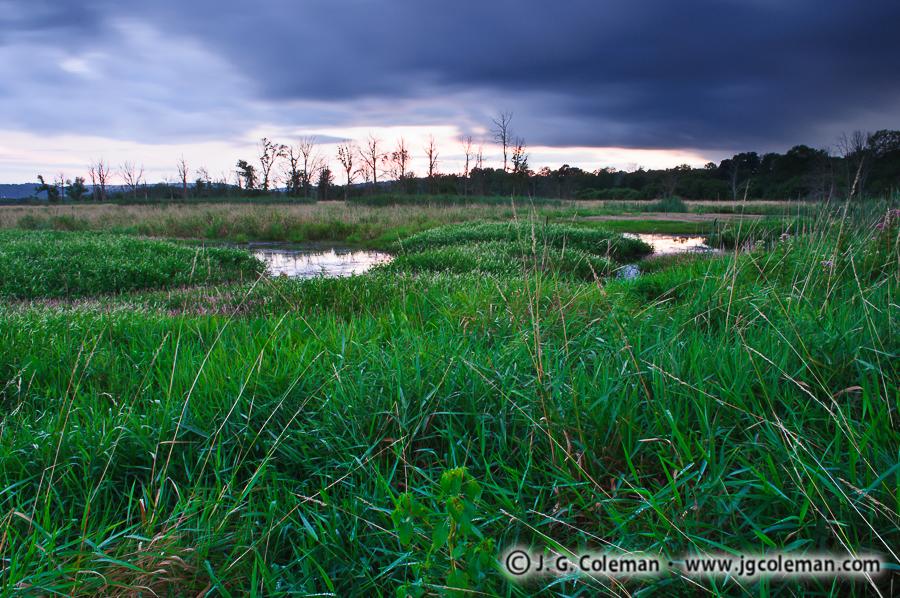 &#8220Dusky Meadow&#8221, Durham Meadows State Wildlife Management Area, Durham, Connecticut