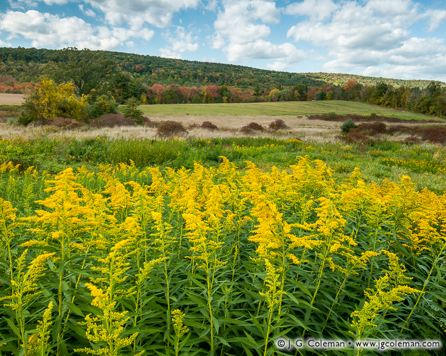 &#8220Goldenrod Hills&#8221, East Granby Farms Recreation Area, East Granby, Connecticut