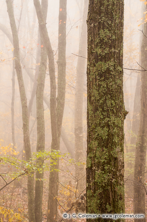 &#8220Looming in the Mist&#8221, Edwin Way Teale Audubon Sanctuary, Hampton, Connecticut