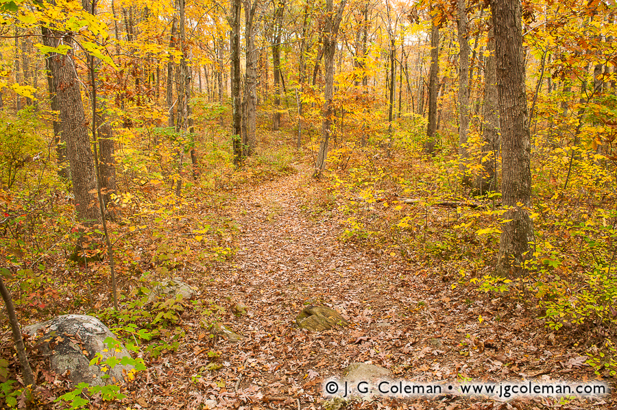 &#8220Finch Brook Woodlands&#8221, Finch Brook Preserve, Wolcott, Connecticut