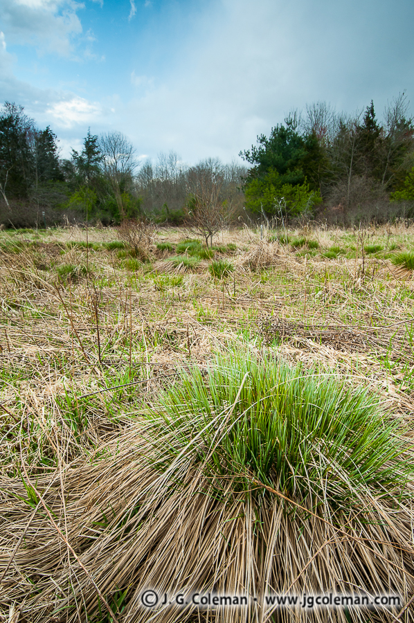 &#8220Tussock Meadows of Cheshire&#8221, Fresh Meadows Wildlife Sanctuary, Cheshire, Connecticut