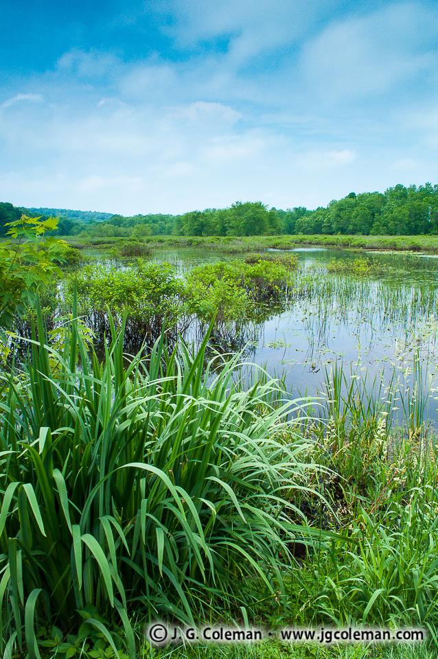 &#8220Swamplands of Haddam Meadows&#8221, Haddam Meadows State Park, Haddam, Connecticut