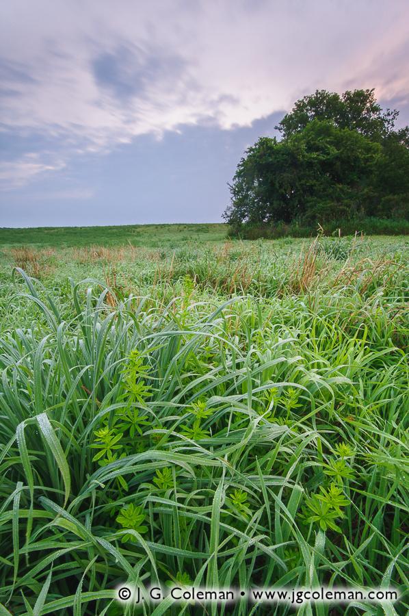 &#8220Morning Meadows of Washington&#8221, Macricostas Preserve, Washington, Connecticut