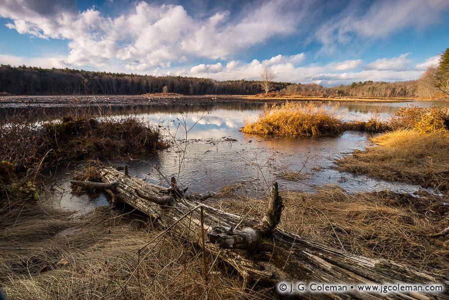&#8220Contemplating Massacoe&#8221, Great Pond, Massacoe State Forest, Simsbury, Connecticut