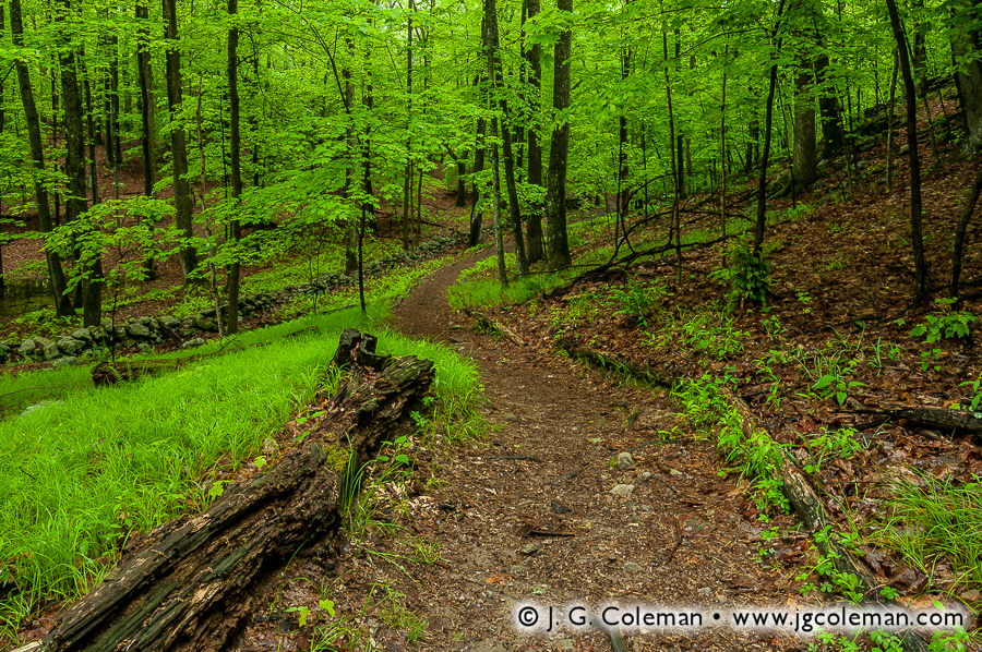 &#8220Winding Like the River&#8221, Mianus River Gorge Preserve, Bedford, New York