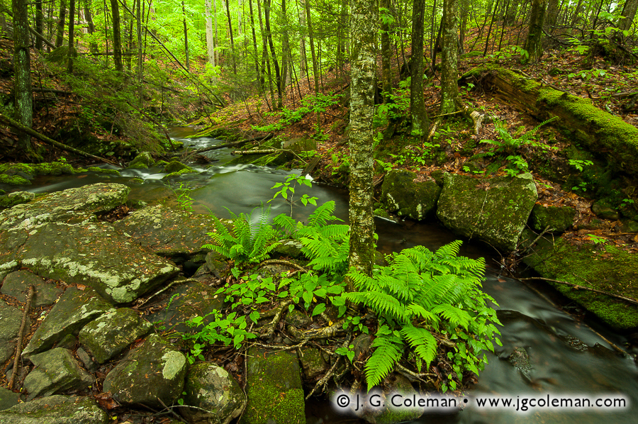 &#8220Mianus Woodlands&#8221, Havemeyer Brook, Mianus River Gorge Preserve, Bedford, New York