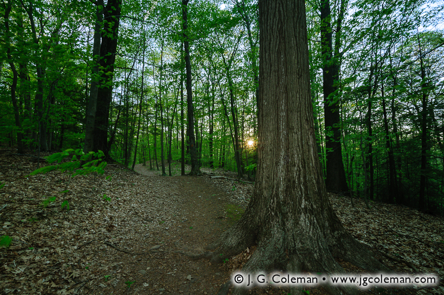 &#8220Dusk on the Trails&#8221, Wadsworth Falls State Park, Middlefield, Connecticut