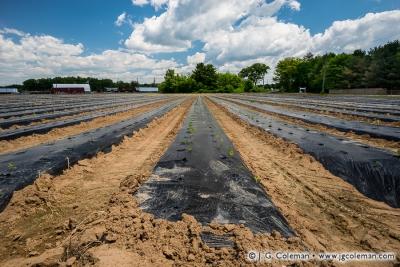 Yankee Farmlands № 66