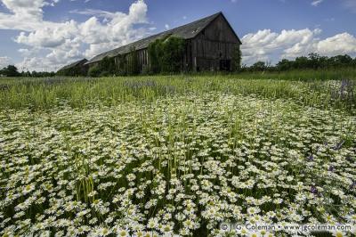 Yankee Farmlands № 68