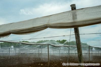 Yankee Farmlands № 29