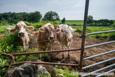 Yankee Farmlands № 30