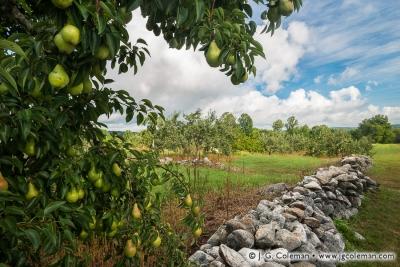 Yankee Farmlands № 36
