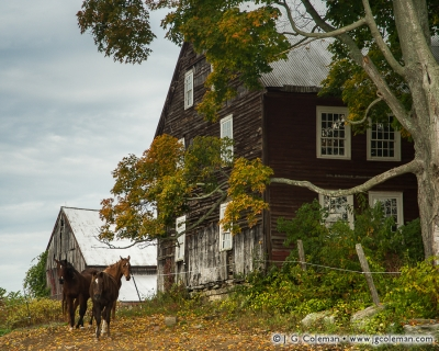 Yankee Farmlands № 41