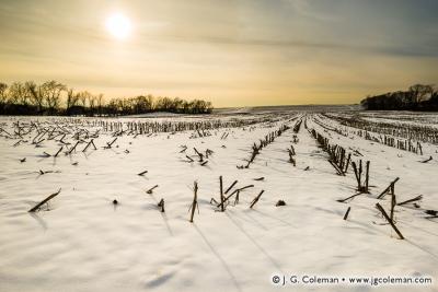 Yankee Farmlands № 50