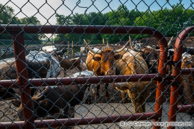 Yankee Farmlands № 72