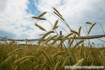 Yankee Farmlands № 76