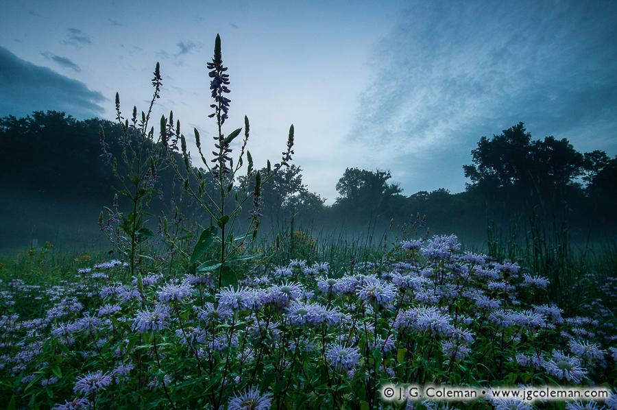 bent-of-the-river-audubon-sanctuary-005.jpg