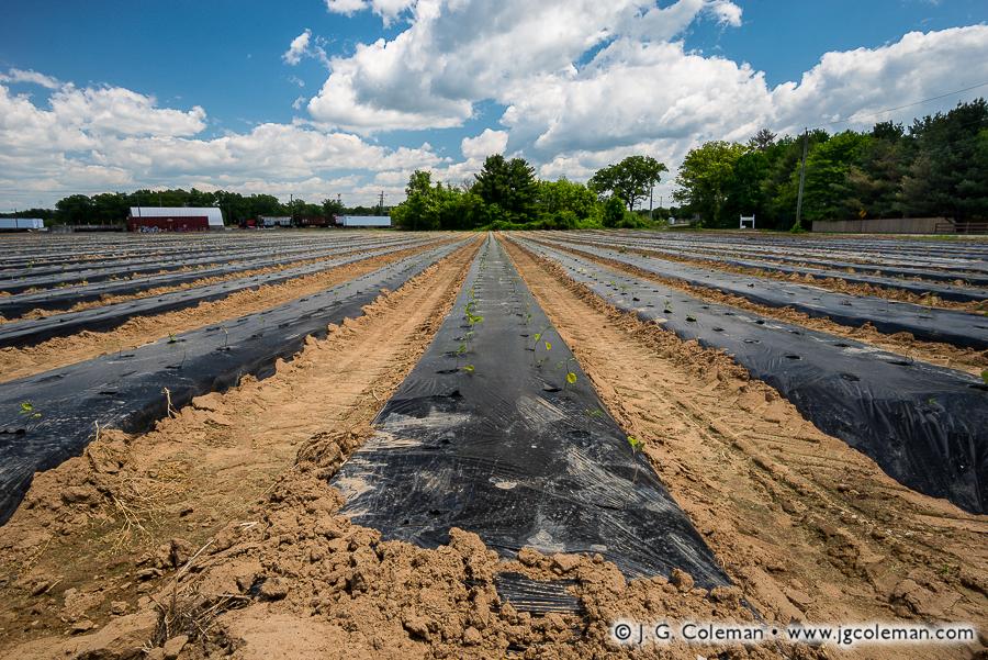 bloomfield-ct-yankee-farmlands-no-66-jgcoleman.jpg