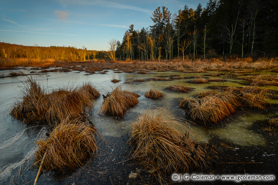 enders-state-forest-008.jpg
