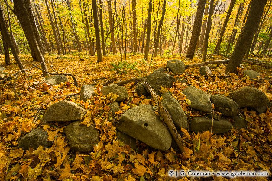 forest-fieldstone-wall-litchfield-connecticut-01.jpg
