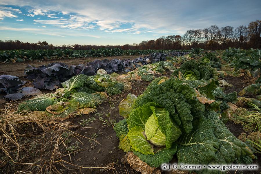yankee-farmlands-no-44-farmington-connecticut.jpg